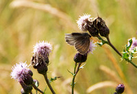 20120714_country walk_0085