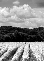 20120714_country walkb_0034