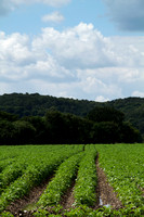 20120714_country walk_0034