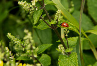 20120714_country walk_0007